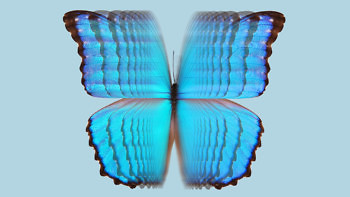 MORPHO JACKET butterfly flap 1376